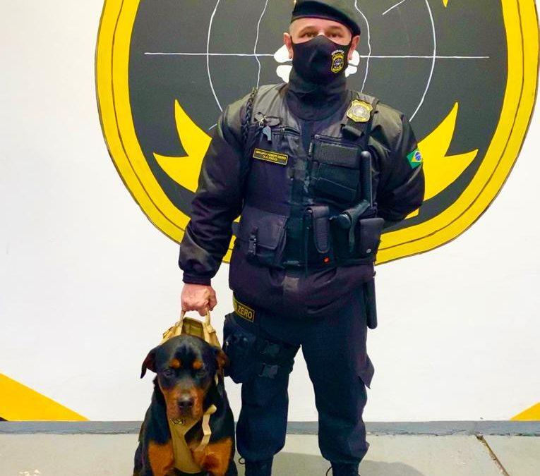 Vigilante Condutor de Cães