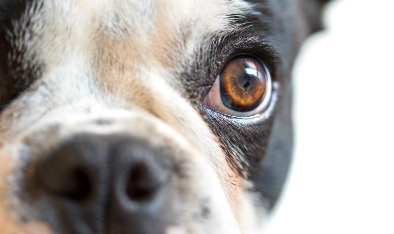 Cegueira em cães e gatos: Dá para prevenir?