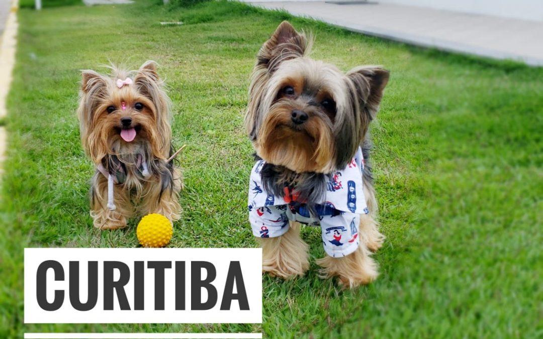 Viagem Petfriendly: Curitiba/PR
