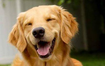MITOS E VERDADES: Higiene Bucal dos Cachorros