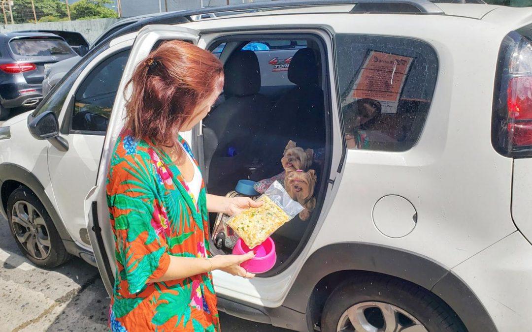 Viajar de carro: Regras para transportar cachorros e outros animais