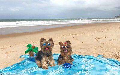Pet Friendly: lugares onde seu melhor amigo é muito bem-vindo