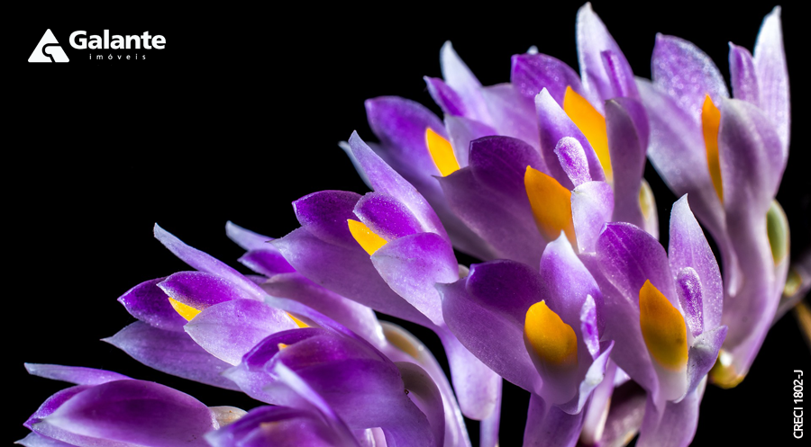 Decore a sua casa com orquídeas na primavera